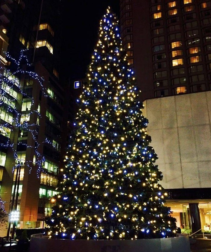 Vancouverites are invited to come together to watch the magical tree light up at CF Pacific Centre on Thursday, Nov. 14. Photo: CF Pacific Centre