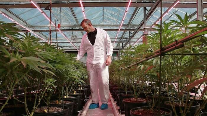 Rubicon Organics CEO Jesse McConnell, wearing shoe protectors in his greenhouse, would have concerns about his plants' biological safety were the facility open to the general public Photo:Rob Kruyt