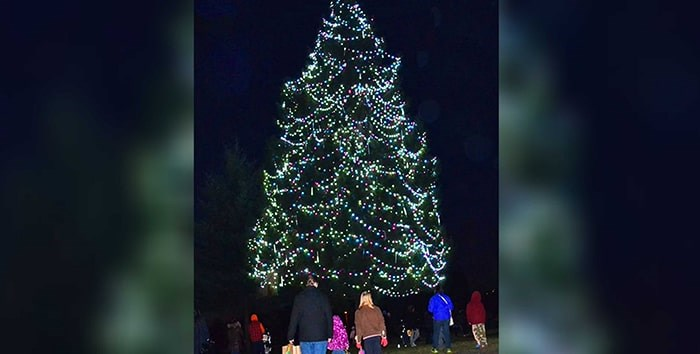 Burnaby will come alive with festive cheer next week when the city's official Christmas tree is lit up for the holiday season. Photo: City of Burnaby