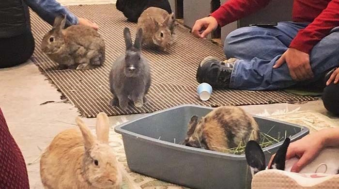 Vancouver is getting its very own Bunny Café, and its owners predict it's going to be rather hop-ular when it opens in spring next year. Photo: Bunny Cafe Vancouver