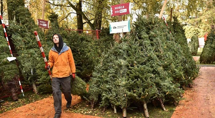It's been 25 years since Aunt Leah's opened its first Christmas tree lot in Vancouver on Granville Street and 54th Avenue. File photo Dan Toulgoet