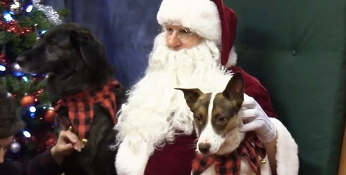 Penticton's SPCA was a full house Saturday with over 80 pets and their owners checking in for the annual SPCA photos with Santa Claus. Photo: Castanet