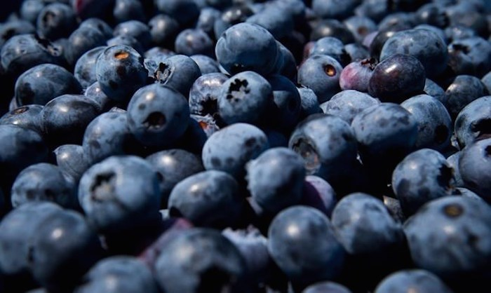 Freshly picked blueberries are seen in Ladner, B.C., on July 21, 2014. THE CANADIAN PRESS/Darryl Dyck