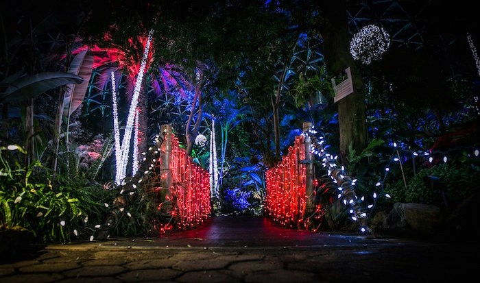 Festivale Tropicale will turn Bloedel Conservatory into a twinkling tropical paradise this holiday season. Photo: