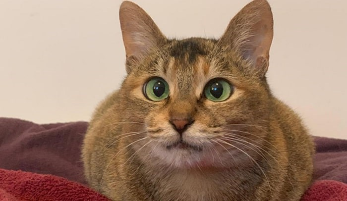 Journey was found emaciated and terrified inside a shipping container in April. Photo: BC SPCA