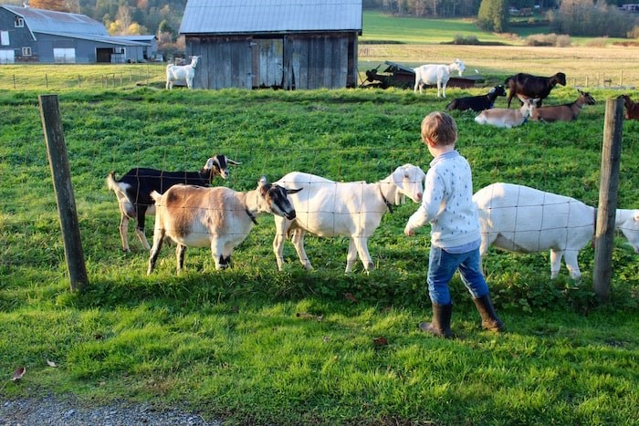 There's lots to see and do (and taste) in Langley, like at Milner Valley Cheese, a family-run goat farm. Photo by Lindsay William-Ross/Vancouver Is Awesome