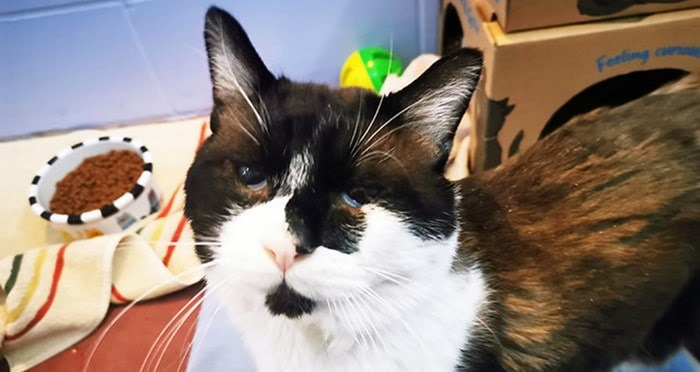 Surviving cat Raffi will need extensive care. Photo: BC SPCA