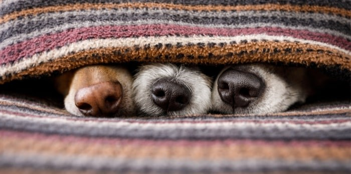 Keep your fur babies warm this winter! Photo: Shutterstock