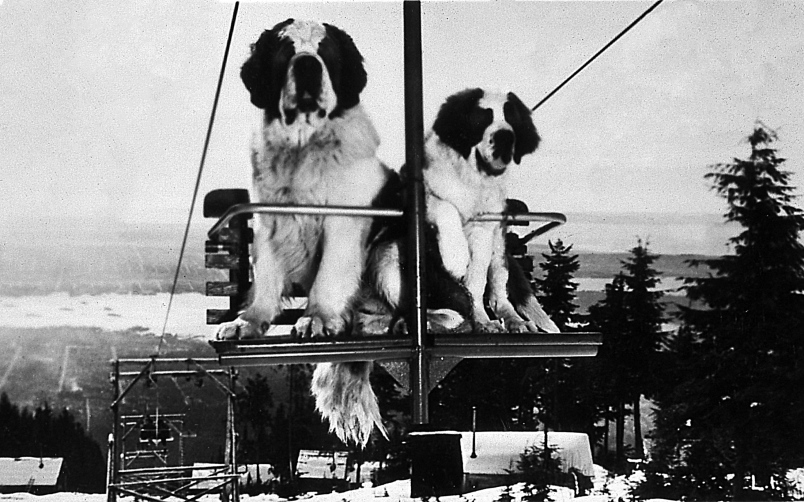Once upon a time when dogs rode the chairlifts in the mountains above Vancouver (PHOTO)