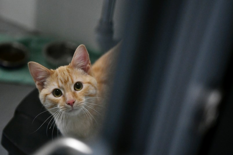 new-westminster-celebrates-official-opening-of-new-animal-shelter-0