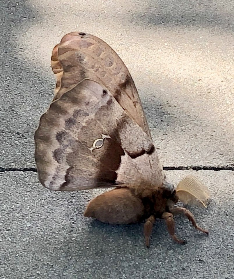 a1-06282020-moth-jpg