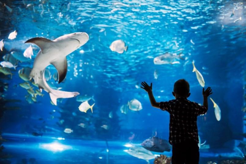 aquarium-nd3000-getty