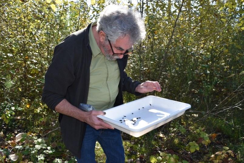 douglas-college-beetle-citizen-scientist
