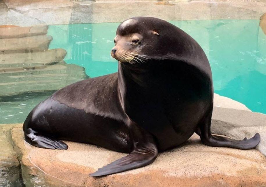 vanaqua sea lion