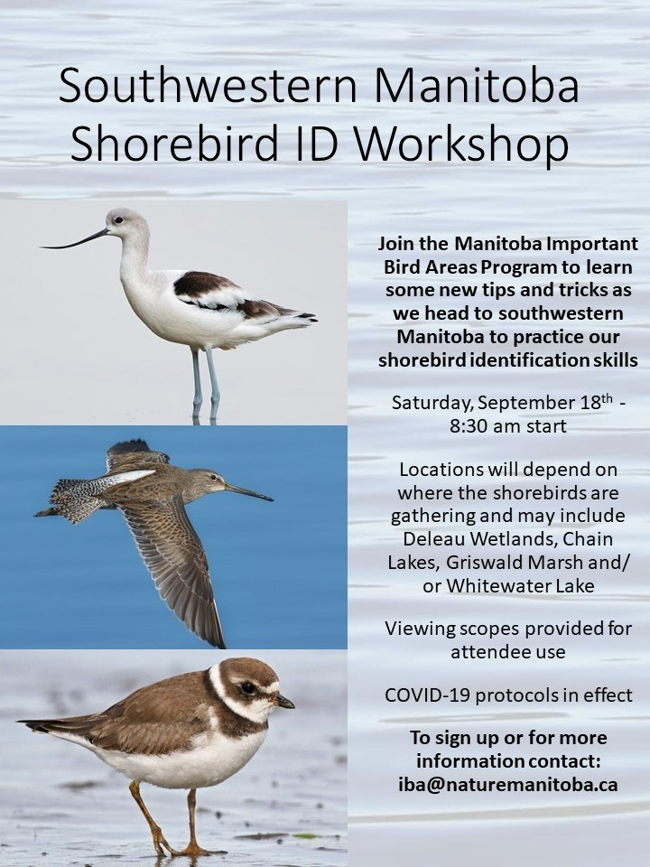 thumbnail_Southwestern Manitoba Shorebird ID Workshop