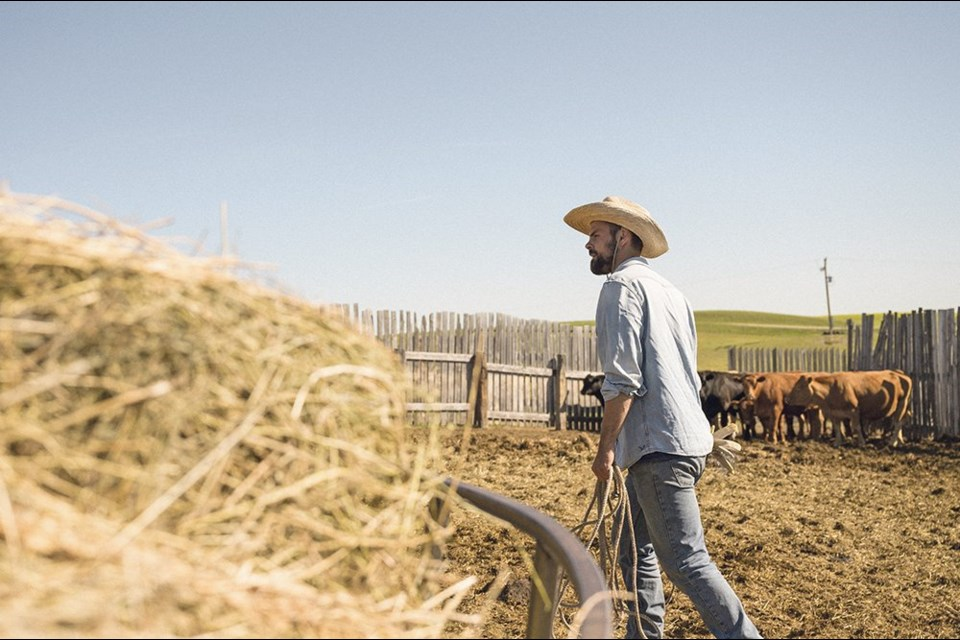Farmer Brandt Fradette tends to cattle near Radville in southern Saskatchewan. Fradette says the operation is suffering from poor hay crop yields this summer.   Tegan Barr