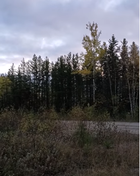 VIRAL VIDEO: Hunter captures mysterious howl near Sioux Lookout